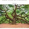 COVER Schembari - Sulle orme di Francesco - FULL SCORE A3